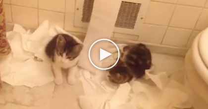Kittens Caught In The Act, Having A Toilet Paper Party, On Camera… This Is SOO Cute And Funny!!