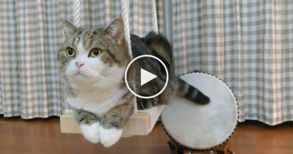 Kitty Climbs Up On The Swing, But Watch What Happens When You Hear His Tail… TOO Funny!!