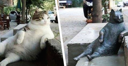 """Laid Back"" Cat Was Loved By Locals, But Now He Has Left A Mark That Nobody Will Forget…"