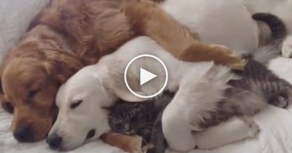 Owners Quietly Records The Cutest Moment EVER, After Discovering This Cuddle Party…