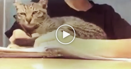 Cat Notices His Human Doing Homework, But Then… Kitty Never Wants To Stop, It's SOO CUTE!
