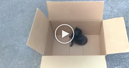 Tiny Black Kitten Ignored And Abandoned, Then Locked In A Cardboard Box… Keep Watching Till The End!