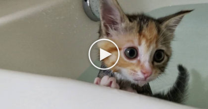 Watch This Little Kitten Handle Her First Bath In The Sweetest Way Ever, It's Just TOO CUTE…
