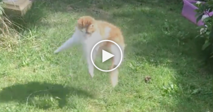 Watch This Cats Reaction When He Plays With His Owner… FUNNIEST Thing Ever, Hahaha!!