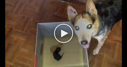 Worried Dog Adopts Two Abandoned Baby Kittens…But Just Watch How She Reacts, SOO Sweet!!