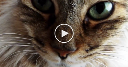 Ancient Egyptians Worshiped Their Cats And Mummified…But That's Not All… Watch The Video!
