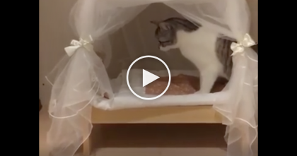 Cat Discovers His New Bed, But Just Watch His Reaction… This Is The CUTEST Idea Ever?!