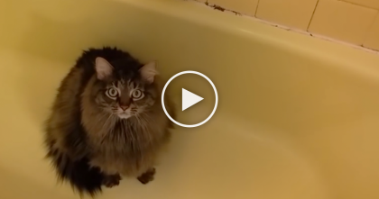 Cat Refuses To Leave Bath Tub, But WATCH His Next Request… LOL, This Is Very Unexpected!