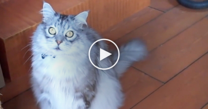 "She Says ""Can You Say Please"" But Watch How The Cat Reacts… This Kitty Is SOOOO Cute!!"