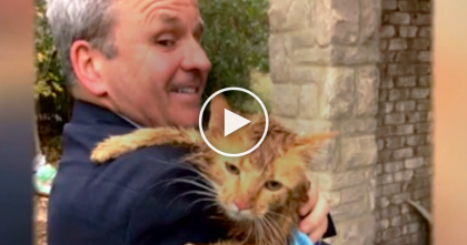 Cat Was Found Stuck In Gutter, But Moments Later… This Story Will Touch Your Heart, Amazing!