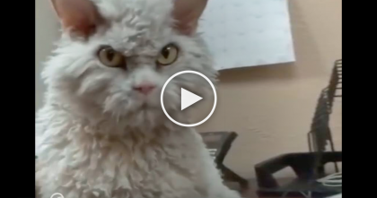 Cat With Crazy Looking Face Looks Eternally Grumpy…But You'll Fall In Love When You Watch This!