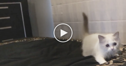 Cat Won't Stop When He Discovers The Bedsheets For The First Time…Just Watch, HILARIOUS!