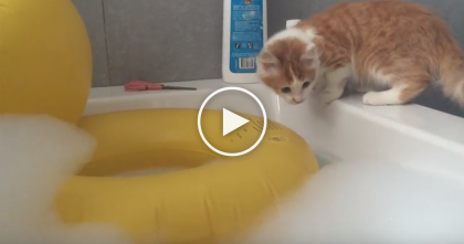 Curious Kitty Is Fascinated By Rubber Ducky And Decides To Jump Inside…But Then Oh NO!!..Poor Cat!