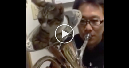 He Picks Up An Instrument, But Just Watch The Cat Inside… When He Starts Playing? This Is Hilarious!