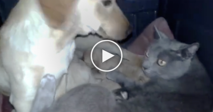 He Went Outside And Discovered The Cat Doing The Most Unexpected Thing… I'll NEVER Forget This, Wow!