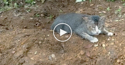 Heartbroken Cat Refuses To Leave Owner's Gravesite… When You See It, This Will Bring Tears To Your Eyes.