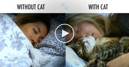Hilarious Differences Between Having Cats And NOT Having Cats Explained In This Video, LOL!