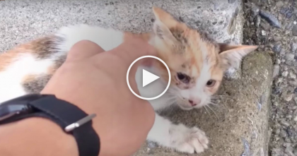 Man Discovers Kitten Who Fell Off Bridge And Broke His Legs, Crying For Help, But Then…Watch The Ending!