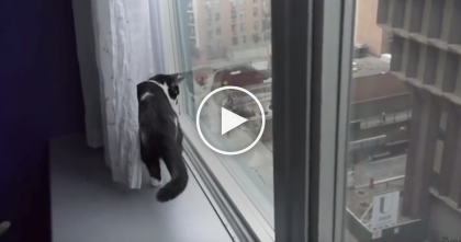 OMG What Is That??!…He Just Can't Figure Out What Is Happening! Just Watch When He Sees The Snow!