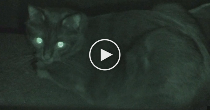 "Seven ""Terrifying"" Reasons Why Cats Are The Scariest Creeps To Live With… #3 Is So True, OMG!"