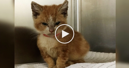 Stray Grumpy Faced Kitty Has Never Been Loved By Anyone, But After Some TLC? Look At THAT SMILE!
