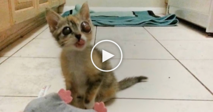 "Stray Kitten Was Found With Rare ""Frog Eyes"", You Won't Believe It…But The End Is Heartbreaking"