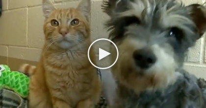 "The Saddest Thing Happens When They're Separated… ""Romeo"" The Cat Couldn't Live Without His ""Juliet"""