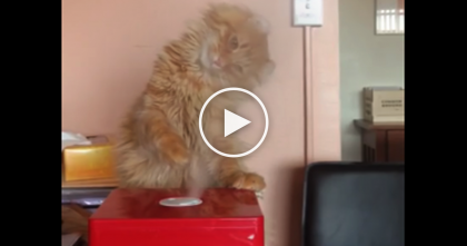 This Cute Orange Fluffball Just Can't Get Enough Of This Magic Machine!….Watch To See His Reaction!