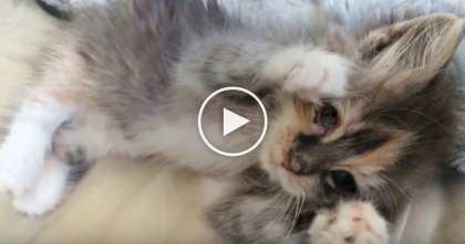 This Guy Saw A Tiny Stray Kitten Shivering In The Cold, But Then Does The Sweetest Thing… WATCH