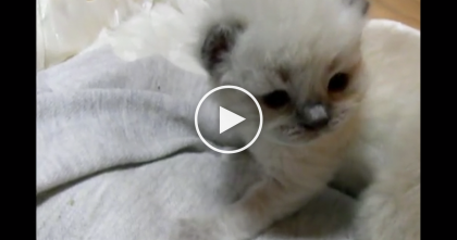 Time Lapse Of Kittens From Day One To Day Fifty!….Just Watch! This video is SOOOOO Precious!