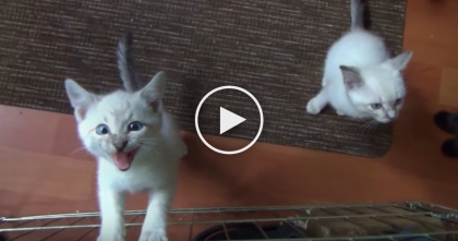 He Comes To Feed The Kittens, But Just Listen To Their Response… Oh My Goodness, SOO CUTE!