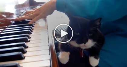 When She Starts Playing The Piano, Kitty Does His Most Favorite Thing And It's Adorable, WATCH