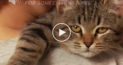 When You Rescue A Cat, They'll Return The Favor In SOO Many Ways… Just Like THIS, Watch Video!