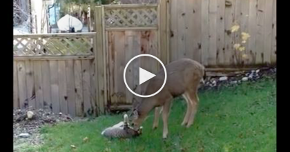 Wild Deer Walks Up To Cat And Starts Doing The Sweetest Thing…Wow, I've Never Seen This Before!