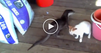 Wild Otter Walks Up To House Cat, But Watch What They Recorded Next… I'll NEVER Forget This Reaction!