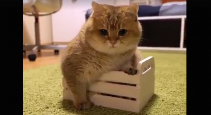 Big Kitty Tries Sitting And Sleeping In A Tiny Box… But The Results Are TOO Funny, Hilarious!!