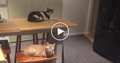 Cat Rejected The Cat Bed, But When He Turns On The Light, Now I Can't Stop Laughing, LOL…