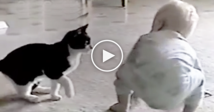 Cat Tries To Attack The Baby, But Keep Watching Till The End… This Is The CUTEST Thing Ever!