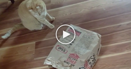 Cat Won't Stop Playing With Paper Bags, But Then They Discovered The Reason Why! WATCH