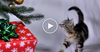 "Cats Wishing You A ""Meowy Christmas And A Happy Mew Year"" Is The Best Thing Ever… Just WATCH!"