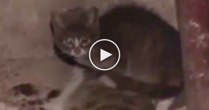 Kitten Trying To Help His Dead Mother Is The Saddest Thing I've Ever Watched… Now I'm In Tears.