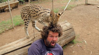 Wild Cat Gives Cameraman A Haircut!!… Just Watch When He Sneaks Up Behind Him, LOL