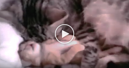 Watch: Mother's Reaction To Baby Kitten Having Nightmare Is The Meaning Of Love… PRICELESS