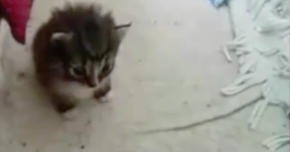 Women Gives Stray Cat Food, But Then The Cat Brings Her The Most Adorable SURPRISE…