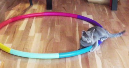 They Left Their Hula Hoop On The Ground, But When The Cat Discovers It… Watch The Reaction, LOL