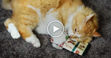Watch The Cats Reaction's When They Discover The Christmas Gifts… OMG, It's Too Funny, Watch!