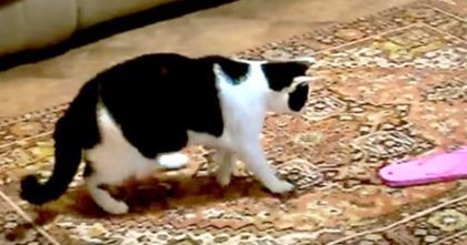 Cats Notice Flip-Flops, But How They React Will Leave You On The Floor laughing… Hahahaha!!