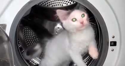Cat Sneaks Into The Dryer, When Owner Notices, Just Watch What The Cat Does… Oh My GOODNESS