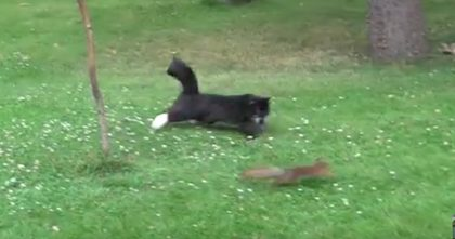 Cat Starts Stalking A Squirrel, But You Have To WATCH Till The End… This Video Is Hilarious!!
