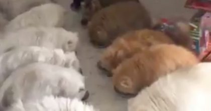 Cats Get Hungry, But When She Gives Them All Food… You've Gotta See The Results, OMG!!